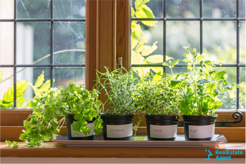 gift garden plants