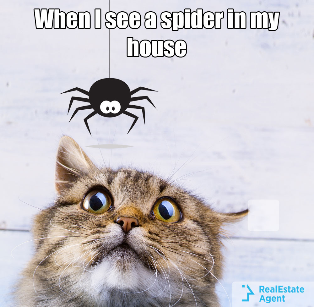 When I see a spider in the house meme